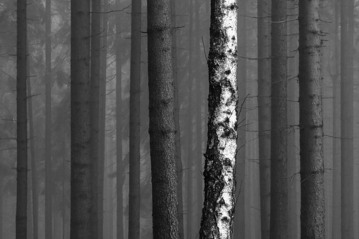 Petr Dudáček: Fotografie ze souboru Lesní obrazy